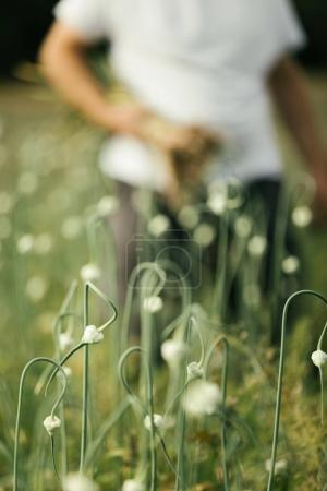 Bllurry Farmer with a Handful of Freshly Picked Garlic in the Field