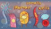 Vector illustration of human somatic cells