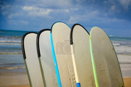 row of different surfboards