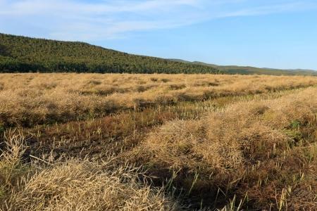 Photo pour Récolter des cultures en collier sur des terres agricoles sous le ciel bleu - image libre de droit