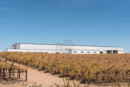Warehouse and vineyards of Tripple D farms in Kakamas