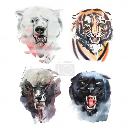 angry looking bear, tiger, wolf and panther