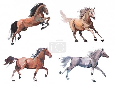 Watercolor painting of galloping horses