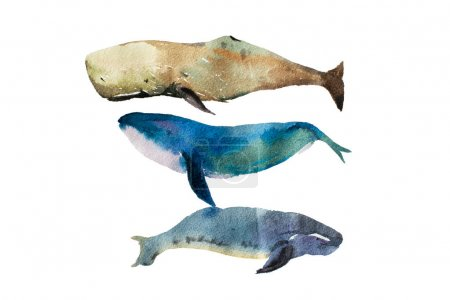 Watercolor realistic whales