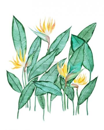 Photo for Hand-drawn aquarelle painting of green leaves with small yellow flowers against white background. - Royalty Free Image