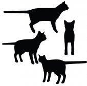 EPS 10 vector illustration of cat on white backgroun