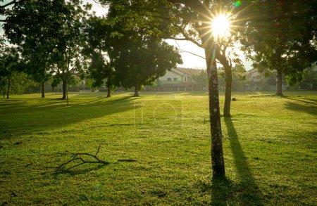 Photo pour Beau parc verdoyant avec arbres. Rayons et fusées éclairantes. Contexte naturel . - image libre de droit