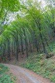 Carpathian mountains forest landscape with bent trees