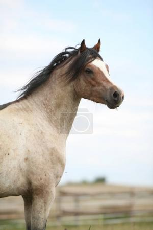 Beautiful pony without an eye