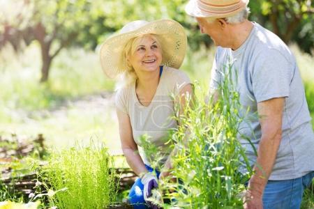 Photo for Smiling happy elderly seniors couple gardening - Royalty Free Image