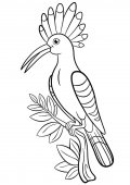 Coloring pages Cute beautiful hoopoe sits on the tree branch and smiles