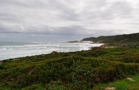 South Africa: beach and vegetation of Cape of Good Hope