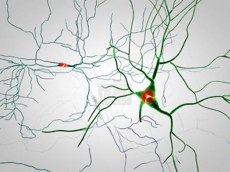 Brain, neurons, synapses, neural network circuit of neurons, degenerative diseases, Parkinson