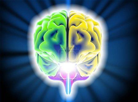 Brain degenerative diseases, Parkinson, synapses, neurons, Alzheimer's
