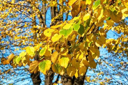 Photo pour Les feuilles tombent, les couleurs de l'automne tombent. - image libre de droit