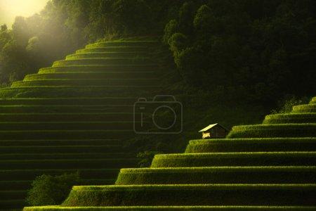 Terraced rice field of Mu Cang Chai, Yenbai, Vietnam