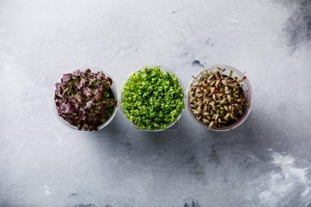 different kind of Cress salad on concrete background