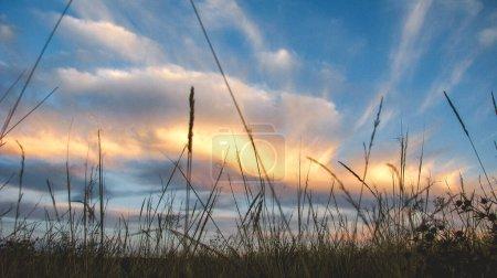 Wild field in the evening in Lugansk region...