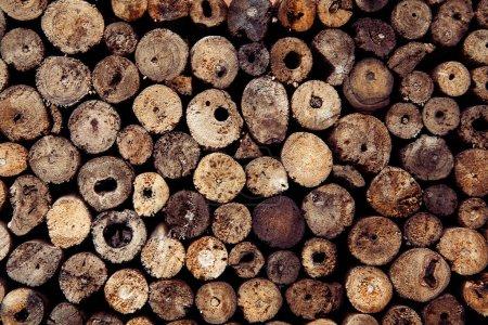 Foto de Tocones de teca redonda Resumen del árbol de círculo de madera de fondo - Imagen libre de derechos