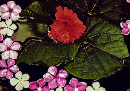 Photo pour Fleurs fraîches de belles et grandes feuilles dans l'étang après la pluie. - image libre de droit