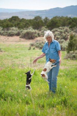 Photo pour Un candid portrait d'une femme senior jouant avec ses petits chiens qui sont ruent pour attention. - image libre de droit