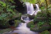 beautiful waterfall in rainforest at phu tub berk mountain  phet