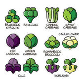 Set of colored icons with different varieties of cabbage Illustration with the vegetables for design food products advertising products environmental articles dietary recommendations