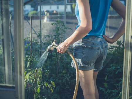 Photo pour Une jeune femme arrose les plants de tomate dans sa serre - image libre de droit