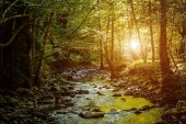 River deep in mountain forest. Nature composition
