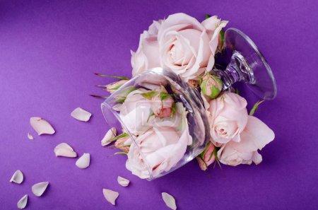 Photo pour De belles roses de lilas pastel dans un verre de vin vide sur fond violet. Contexte romantique floristique. - image libre de droit