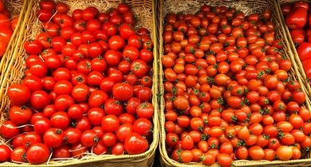 Pile of fresh organic various tomatoes