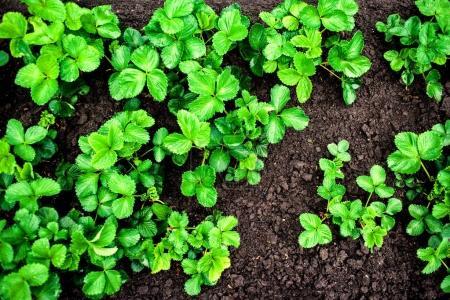 seedlings growing in soil