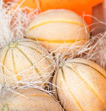 Photo for Fresh organic Melon fruits. Frame composition of fruits on market stall - Royalty Free Image