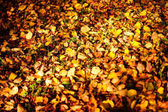 Beautiful autumn park. Texture of yellow leaves as autumn leaf background
