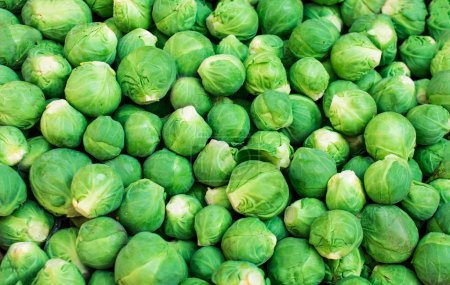 Photo for Close-up view of fresh raw Brussels sprouts Background - Royalty Free Image