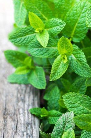 Photo pour Feuille de menthe fraîche, herbe de mélisse sur fond bois avec copyspace, proche u - image libre de droit