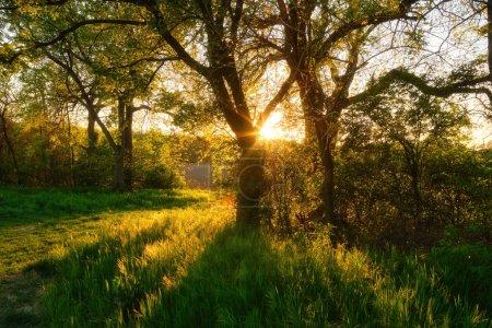 Photo pour Belle nature le soir dans les arbres de la forêt de printemps avec des rayons de soleil - image libre de droit