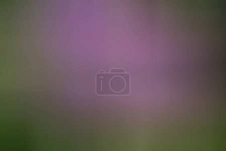 Pink and green color blur, abstract background...