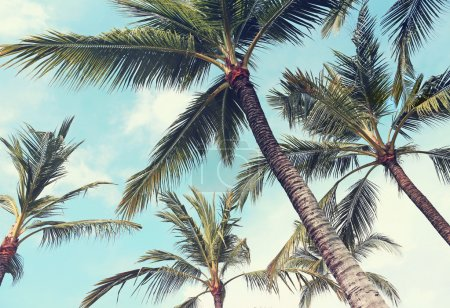 Palm trees, vintage effect...