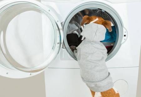 Grey hoodie sweater dog back near washing machine.