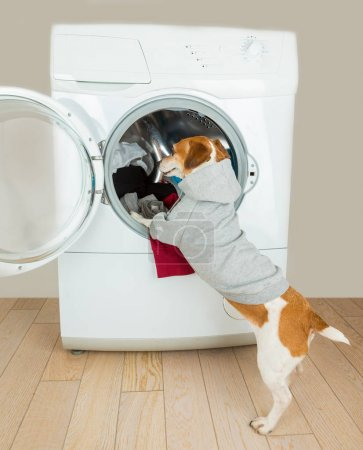 Adorable small dog put clothes to washing machine.