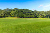 Green grass and trees in beautiful park under the blue sky