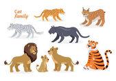 Cat family Felidae Pantherinae Tiger Lion Jaguar