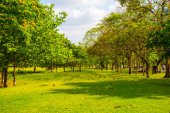 City park with green meadow and tree