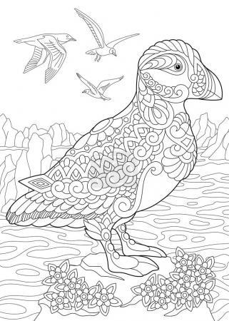 Illustration pour Coloriage de macareux, un pingouin nichant dans des trous (oiseaux marins) dans les eaux du nord et de l'Arctique. Croquis à main levée dessin pour adulte livre de coloriage anti-stress dans le style zentangle . - image libre de droit