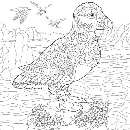 Illustration pour Coloriage de macareux, oiseaux marins des eaux nordiques et arctiques. Croquis à main levée dessin pour adulte livre de coloriage anti-stress dans le style zentangle . - image libre de droit