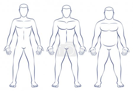Illustration for Body types - ectomorph, mesomorph and endomorph. - Royalty Free Image