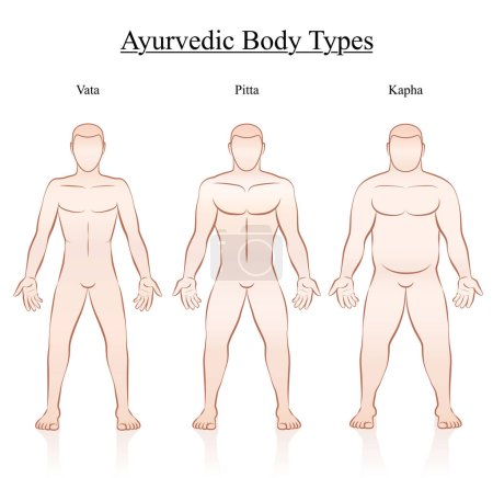 Illustration for Ayurvedic body constitution types - vata, pitta, kapha. Outline illustration of three men with different anatomy. - Royalty Free Image