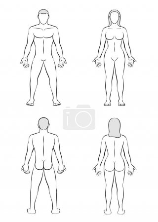 Illustration for Man and woman - posterior and anterior view - outline illustration of the human body. - Royalty Free Image