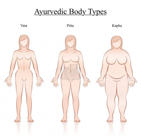 Illustration for Body constitution types - ayurvedic typology - vata, pitta, kapha. Isolated outline vector illustration of female body - frontal view - different anatomy. - Royalty Free Image